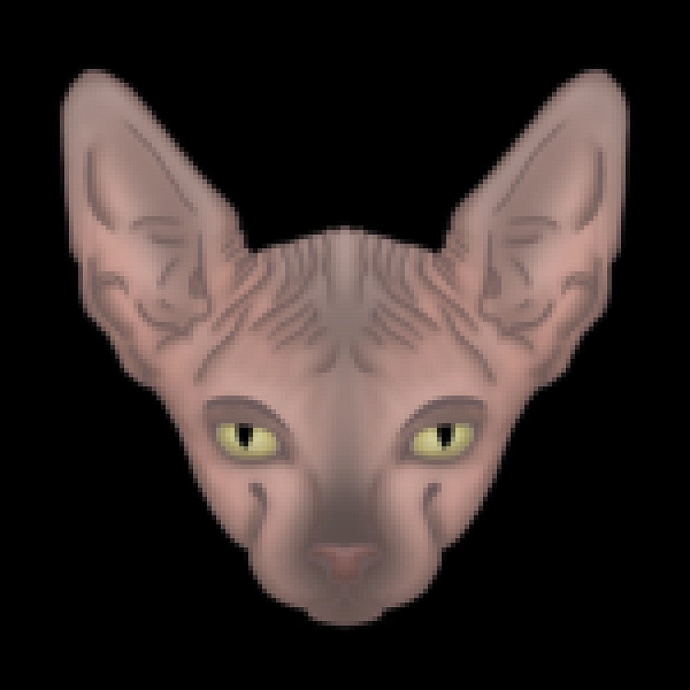 sphynx-cats-for-rehoming profile